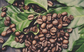 Picture leaves, macro, coffee, placer, a lot, coffee beans