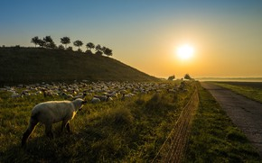 Picture road, sunset, sheep, the herd