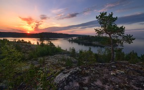 Picture sunset, river, shore, pond, pine