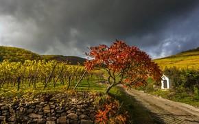 Picture road, autumn, vineyard