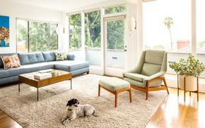 Picture interior, living room, The Happy, mid-сentury modern