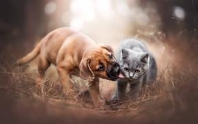 Wallpaper kiss, dog, puppy, kitty, kids, friends