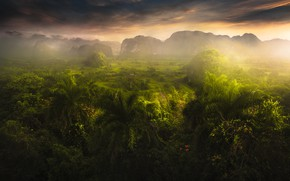 Picture mountains, palm trees, field, valley, jungle, haze