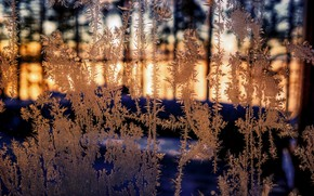 Picture cold, winter, frost, glass
