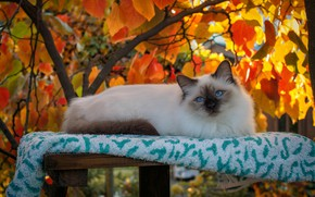 Picture cat, cat, look, leaves, light, branches, nature, comfort, tree, stay, foliage, beauty, towel, lies, blue …