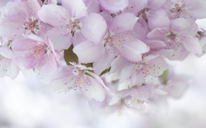 Picture pink, tenderness, spring