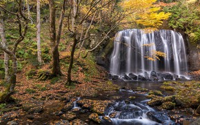 Picture autumn, forest, landscape, river, rocks, waterfall, forest, river, landscape, beautiful, autumn, leaves, waterfall