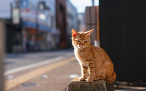 Picture road, cat, cat, light, the city, pose, kitty, wall, street, building, red, kitty, the sidewalk, …