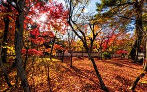 Picture autumn, forest, leaves, trees, Park, colorful, forest, landscape, park, autumn, leaves, tree, fall