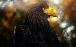 Picture bird, predator, beak