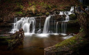 Picture forest, branches, stones, rocks, vegetation, foliage, waterfall, moss, stream, stage, waterfalls, cascade, logs, driftwood