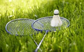 Picture summer, grass, mood, sport, the game, badminton, racket, birdies
