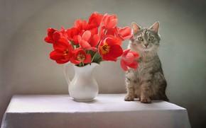 Picture cat, cat, flowers, table, animal, tulips, pitcher, Kovaleva Svetlana, Svetlana Kovaleva