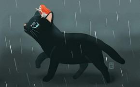 Picture rain, fantasy, girl, black cat