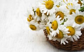 Picture summer, basket, chamomile, bouquet, Olena Rudo