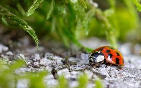 Picture stones, ladybug, plants, bokeh