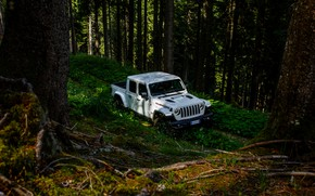 Picture forest, white, trees, SUV, pickup, Gladiator, 4x4, Jeep, Rubicon, 2019