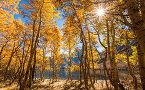Picture autumn, forest, the sun, rays, trees, mountains, lake, CA, USA, yellow, June Lake