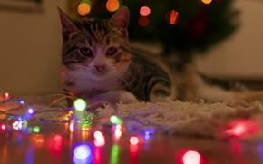 Picture cat, look, garland, bokeh