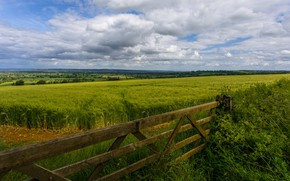 Picture field, summer, clouds, landscape, Board, the fence, rye, the fence, ears, cereals, out of the …