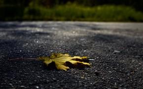 Picture autumn, asphalt, sheet, Wallpaper, yellow leaf