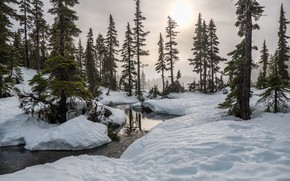 Picture winter, forest, the sky, the sun, snow, trees, nature, river