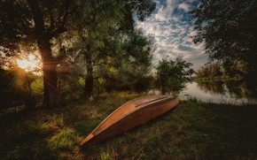 Picture forest, trees, shore, boat, pond