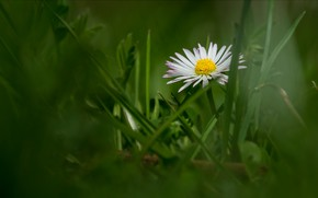 Picture flower, grass, bokeh