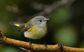 Picture bird, branch, pichuga