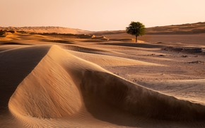 Picture nature, tree, desert, Oman, Wahiba Sands