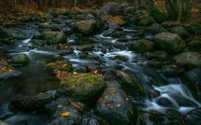 Picture autumn, forest, leaves, trees, stream, stones, waterfall