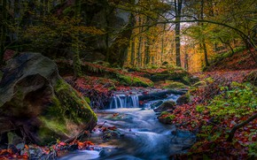 Picture autumn, forest, branches, stream, stones, rocks, foliage, stone, waterfall, stream, river, falling leaves, boulders