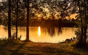 Picture the sun, light, trees, sunset, nature, river