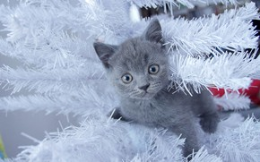 Picture cat, look, kitty, grey, holiday, new year, Christmas, baby, muzzle, white, kitty, tinsel, herringbone, face, …