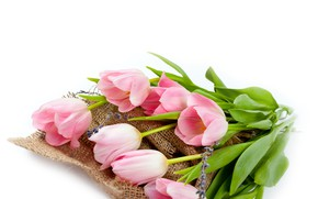 Picture white, background, bouquet, tulips, pink