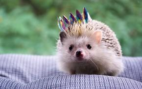 Picture crown, face, hedgehog, царь просто царь