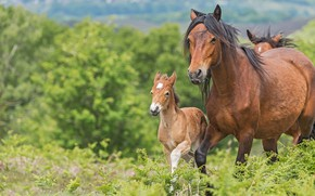 Picture greens, summer, grass, face, trees, horse, two, horses, baby, horse, pair, walk, fern, mom, foal