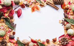 Picture autumn, cinnamon, bumps, chestnuts, listia