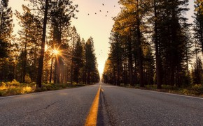 Picture road, forest, the sky, the sun, rays, trees, birds, view