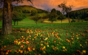 Picture greens, autumn, summer, grass, clouds, trees, landscape, sunset, branches, Park, hills, glade, apples, the evening, …