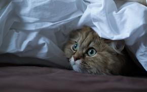 Picture cat, look, room, fabric