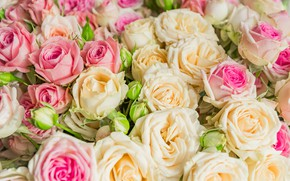 Picture flowers, roses, bouquet, Pink, beige