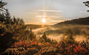 Picture forest, the sky, the sun, rays