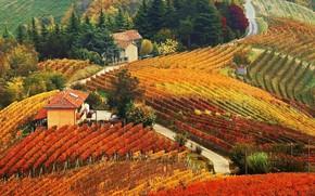 Picture autumn, house, hills, vineyard