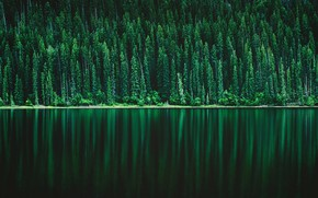 Picture forest, lake, reflection
