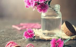 Picture flowers, jar, clove, coil