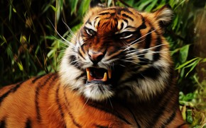 Picture face, tiger, fangs