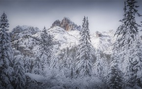 Picture winter, snow, mountains, ate, Christmas trees