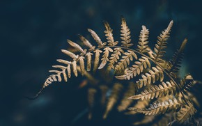 Picture forest, nature, fern