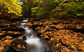 Picture autumn, forest, leaves, trees, branches, stream, stones, waterfall, yellow foliage